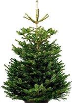 Echte kerstboom - Nordmann Excellent - 125-150cm