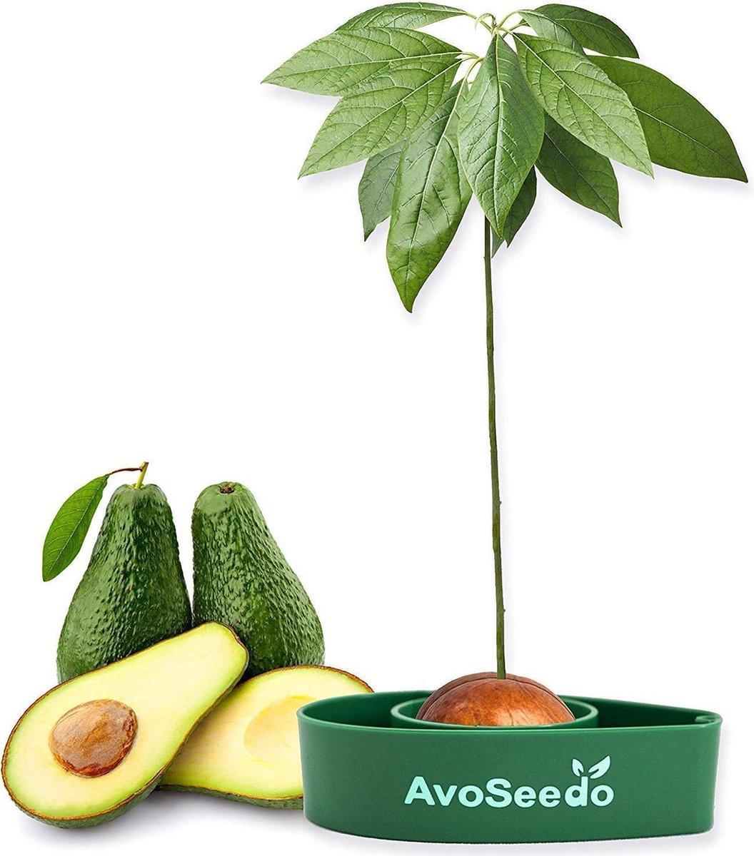 AvoSeedo - Avocado Boom - Kweek Kit - Praktische Tuinier Cadeau - Avocado Lovers
