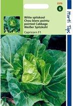 Witte spitskool Capricorn F1 - Brassica oleracea - 4 sets