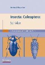 Insecta: Coleoptera: Scirtidae