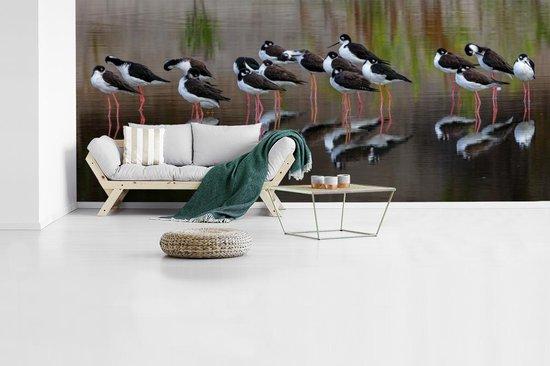 Fotobehang vinyl - Grote groep kluten in het water breedte 630 cm x hoogte 270 cm - Foto print op behang (in 7 formaten beschikbaar)