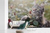 Maine Coon Cat onder de rode rozen in de tuin fotobehang vinyl breedte 420 cm x hoogte 280 cm - Foto print op behang (in 7 formaten beschikbaar)
