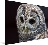 Bosuil op een zwarte achtergrond Canvas 60x40 cm - Foto print op Canvas schilderij (Wanddecoratie woonkamer / slaapkamer)