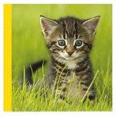 Snoezige dieren knisperboekje / Livre frou-frou adorables animaux