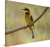 Een kleurrijke dwergbijeneter op een tak Canvas 120x80 cm - Foto print op Canvas schilderij (Wanddecoratie woonkamer / slaapkamer)
