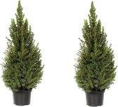 PLANT IN A BOX Picea Conica - Kerstboompjes - Set van 2 stuks