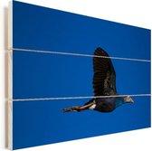 Purperkoet vliegt onder een blauwe hemel Vurenhout met planken 90x60 cm - Foto print op Hout (Wanddecoratie)