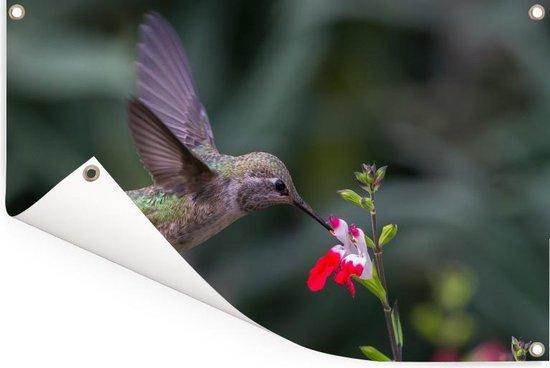Een calliope kolibrie vliegt bij een bloem Tuinposter 180x120 cm - Tuindoek / Buitencanvas / Schilderijen voor buiten (tuin decoratie) XXL / Groot formaat!