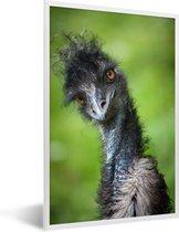 Foto in lijst - Een emoe kijkt recht in de camera fotolijst wit 40x60 cm - Poster in lijst (Wanddecoratie woonkamer / slaapkamer)