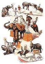 Carnet Lign� Animaux Dress�s, Cirque
