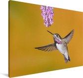 Een calliope kolibrie op een gele achtergrond Canvas 60x40 cm - Foto print op Canvas schilderij (Wanddecoratie woonkamer / slaapkamer)