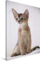 Abessijn kitten op een witte achtergrond Canvas 80x120 cm - Foto print op Canvas schilderij (Wanddecoratie woonkamer / slaapkamer) / Huisdieren Canvas Schilderijen