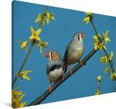 Twee Zebravinken in de blauwe lucht Canvas 60x40 cm - Foto print op Canvas schilderij (Wanddecoratie woonkamer / slaapkamer)