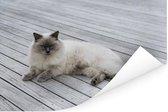Een Ragdoll kat liggend op de steiger Poster 120x80 cm - Foto print op Poster (wanddecoratie woonkamer / slaapkamer) / Huisdieren Poster