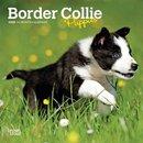 Border Collie Puppies 2020 Mini Wall Calendar