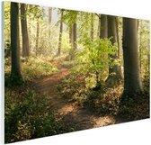 Een bospad verlicht door de zon Glas 90x60 cm - Foto print op Glas (Plexiglas wanddecoratie)
