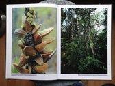 Borneo Alive Insight Topic