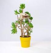 The Amazing Plant-hut | miniature treehouse