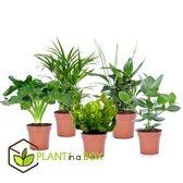 PLANT IN A BOX Luchtzuiverende kamerplanten mix - Set van 5 stuks - pot ⌀12 cm - Hoogte ↕ 30 - 40 cm