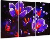 Canvas schilderij Krokus | Oranje, Blauw, | 120x80cm 3Luik