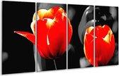 Glasschilderij Tulp   Rood, Grijs, Zwart   160x80cm 4Luik   Foto print op Glas    F002397