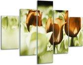 Glasschilderij Tulpen | Bruin, Groen, Wit | 100x70cm 5Luik | Foto print op Glas |  F002773