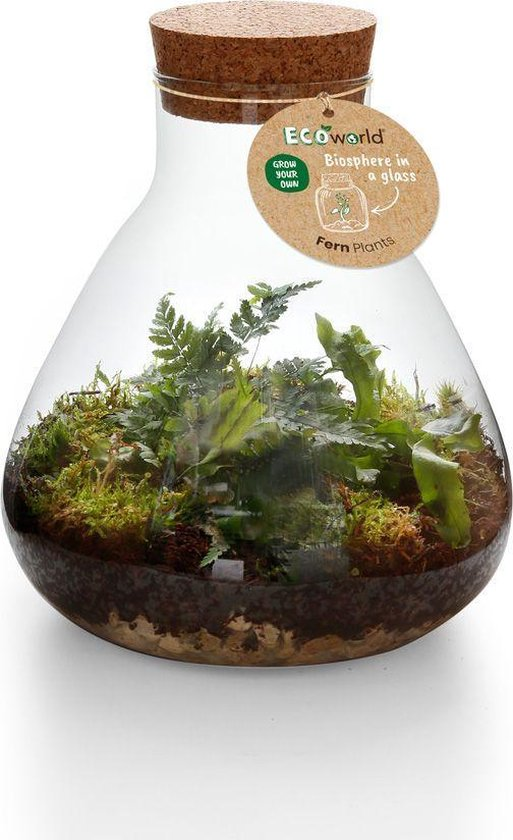 Ecoworld Jungle Biosphere Ecosysteem Plant - Piramide Glas - Ø 23 cm ↕ 26 cm
