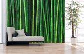 Fotobehang Bamboe - uit 1 stuk, Naadloos Fotobehang - 430 x 265 cm (bxh) - op elk formaat leverbaar
