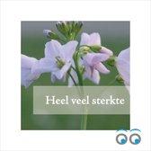 20 sterkte kaartjes - paarse bloemen - 7 x 7 cm