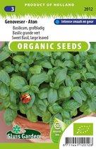 Sluis Garden - Basilicum, grofbladig. Genoveser - Gustosa - BIO zaden