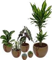 Set van 6 planten met bijpassende groene plantenpotten – kamerplanten voor binnen met verschillende groottes - Mapot