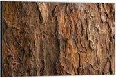 Dibond –Boomschors – 60x40 Foto op Aluminium (Wanddecoratie van metaal)