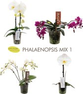 OPTI-FLOR GIFTBOX MIX 1 (t.w.v. €90,-)