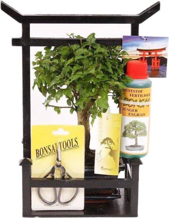 Bonsai Torii Starter Geschenkset