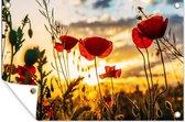 Rode papavers bij een zonsopkomst tuinposter 120x80 cm - Tuindoek / Buitencanvas / Schilderijen voor buiten (tuin decoratie)