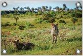 Tuinposter –Een Coyote in Grasveld– 60x40 Foto op Tuinposter (wanddecoratie voor buiten en binnen)