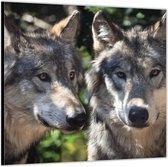 Dibond –Wolvenpaar– 50x50 Foto op Aluminium (Wanddecoratie van metaal)