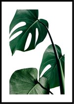 Poster van Monstera Plant - A3 Botanische Poster 29x42cm