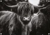 Schotse hooglander zwart wit Tuinposter 120x80 cm - Tuindoek / Buitencanvas / Schilderijen voor buiten
