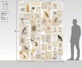 De vogels van Joseph Wolf