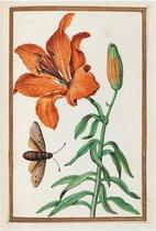 The Fitzwilliam Museum blanco wenskaartjes Lilies