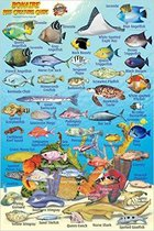 Franko Maps Bonaire Reef Creatures Guide (MiniCard)