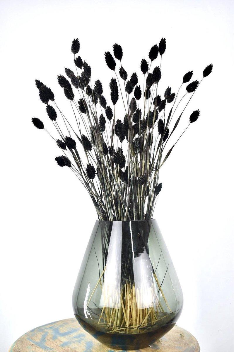 Droogbloemen Phalaris Zwart   Kanariegras   60 cm   Natuurlijk Bloemen