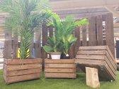 Plantenkist | fruitkist hout met wieltjes | Planten box vintage 60 liter | 50x40x34cm |Plantenbak | tuinkist | verrijdbaar | hot & trendy
