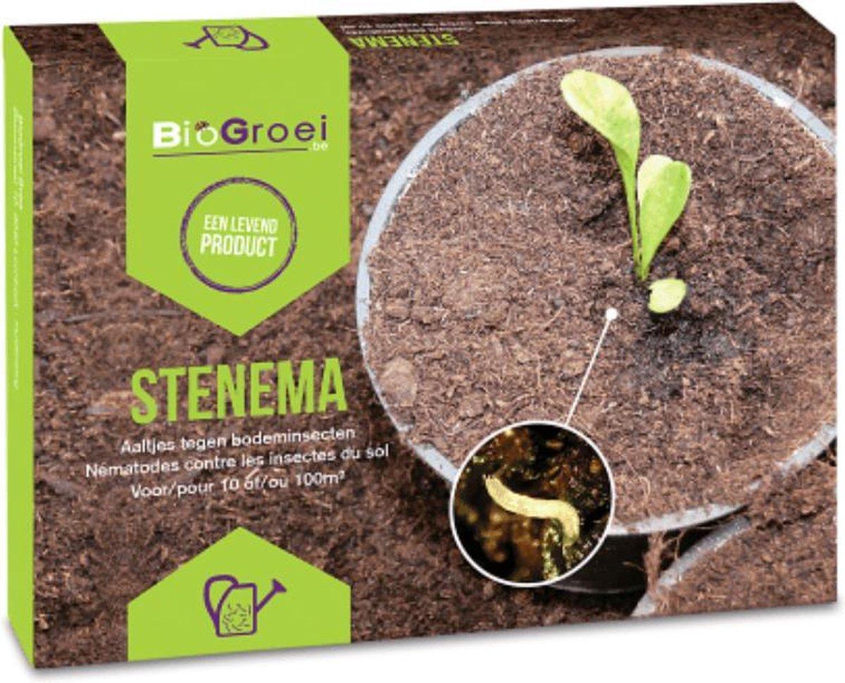 Aaltjes tegen Rouwvliegjes   Stenema 10m²   Rouwvliegen bestrijden   Varenrouwmug bestrijden in kamerplanten op De Prijzenvolger