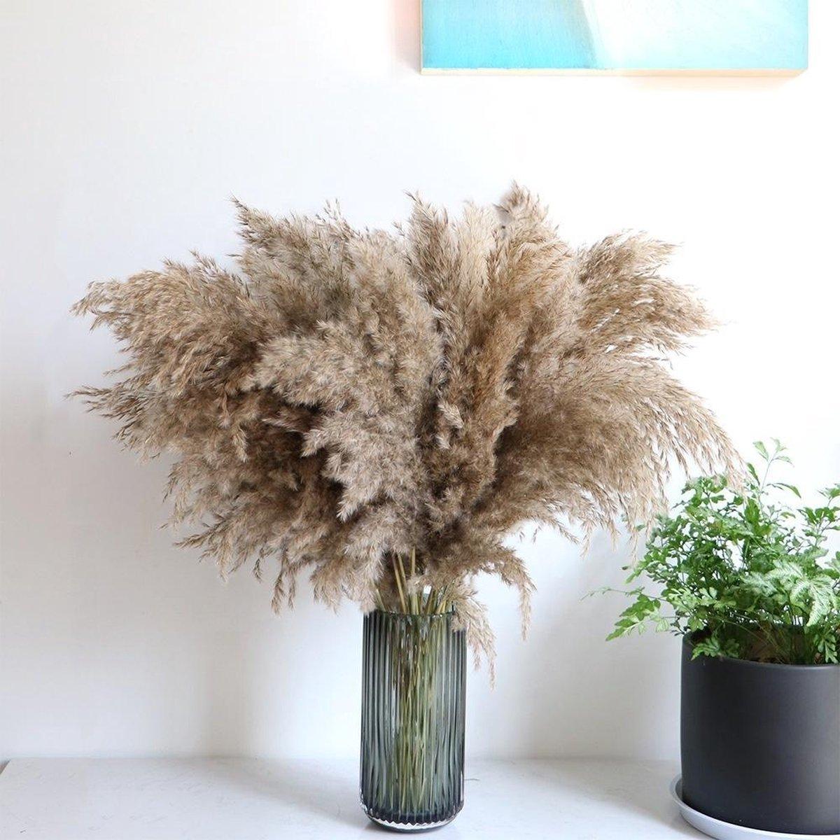 Pampas pluimen   10 stuks   Pampasgras   Droogbloemen   80/ 90cm   Boeket decoratie pluimen   Luxury