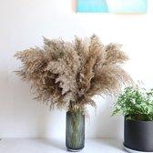 Pampas pluimen   10 stuks   Pampasgras   Droogbloemen   80/ 90cm   Boeket decoratie pluimen   Luxury Living   Rietpluimen