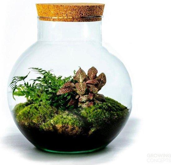 Growing Concepts DIY Duurzaam Ecosysteem Glazen Bol met Kurk - Planten - Botanische Mix - H30xØ18cm