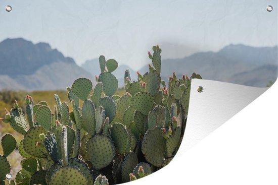 Tuinposter - Een close up van een cactus met de heuvels in het Nationaal Park Big Bend - 180x120 cm - XXL