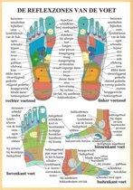 Het menselijk lichaam - anatomie poster voetreflexologie (Nederlands, gelamineerd, A2) + ophangsysteem